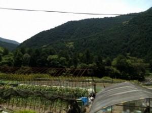 写真 和歌山県③